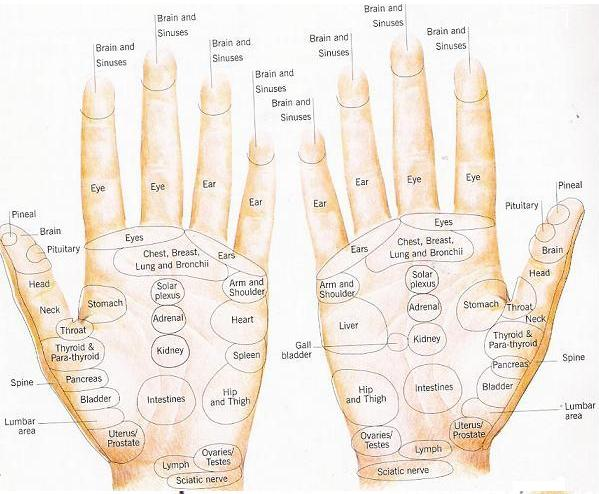REFLEXOLOGY HANDS