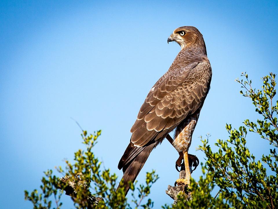 veille commerciale : apprenez à devenir un aigle et détecter les meilleurs signaux business