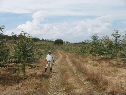 Superior Nut Company Carbon-Offset Forest No. 5; Photo taken October 2007