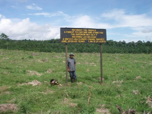 The field is planted for one of our sponsors who is balancing his CO2 emissions in 7 forests with RTT.  In the backgound are the 2007 plantings for other sponsors.