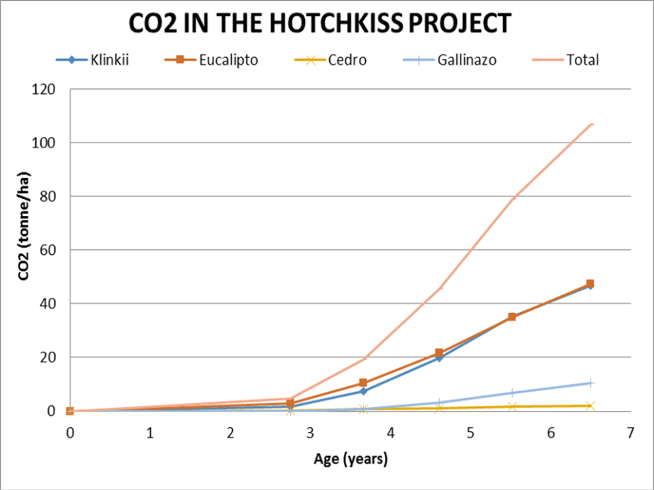 Captured CO2 in the Hotchkiss School carbon offsett forest