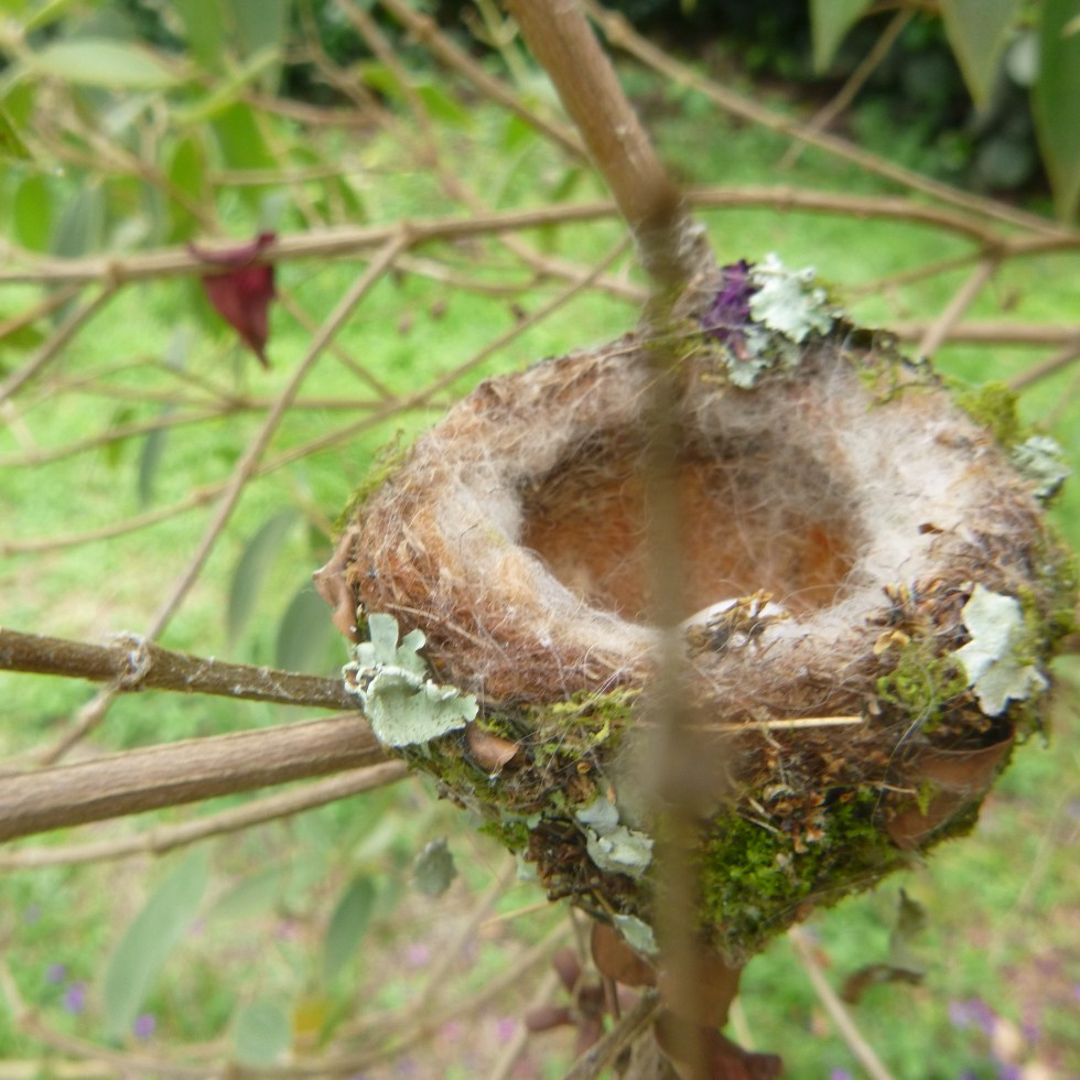 Nest embedded into a tree in the forest