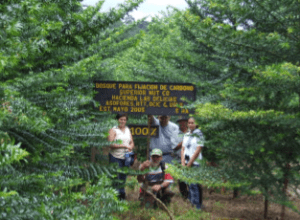 A 3.5-year-old carbon-offest forest in Costa Rica sponsored by The Superior Nut Company and managed by Reforest the Tropics, Inc.
