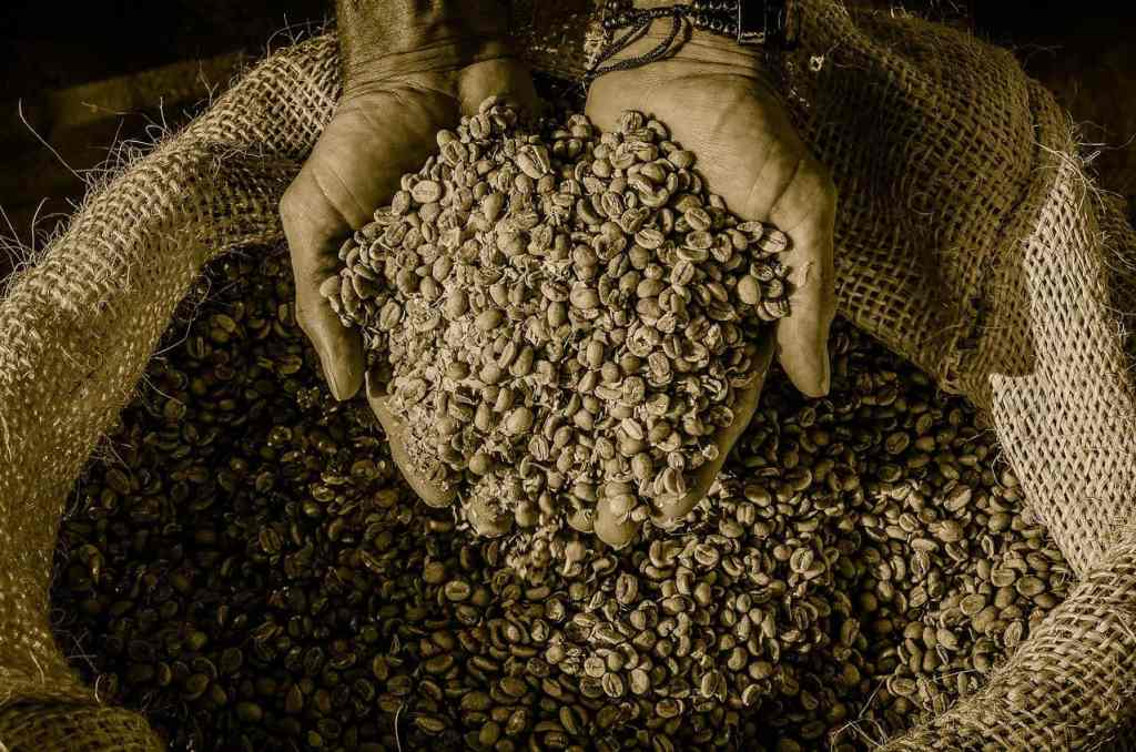 Exporting of Coffee