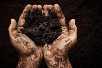 Peet Moss Soil