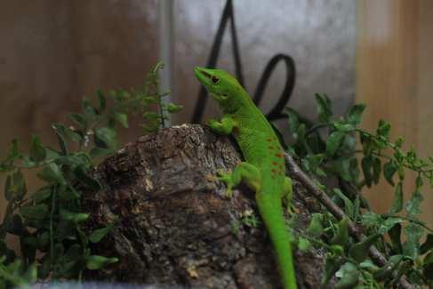 Nature Center_Gecko_Animals