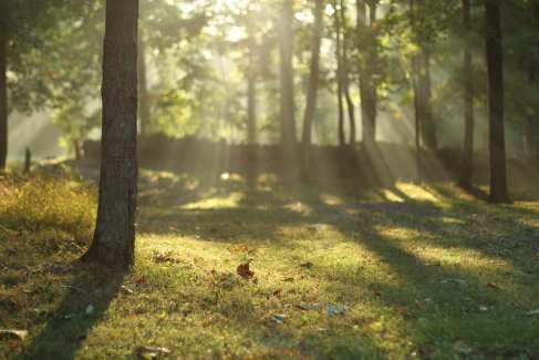 Sunrise_Banner_Retreat_Relax_Tree_Scenery