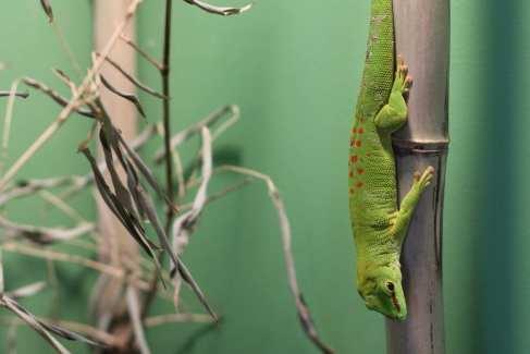 Nature Reptile Display