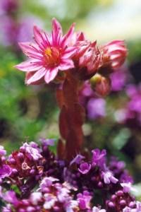 fleur d'en haut