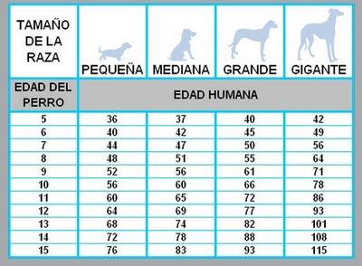 La edad de los perros en comparación con la de los humanos
