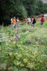 Regain Mure Ardeche - Plantes sauvages5
