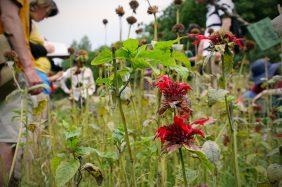Regain Mure Ardeche - Plantes sauvages8
