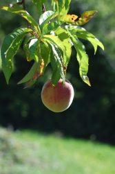 Regain Mure Ardeche - Plantes sauvages9