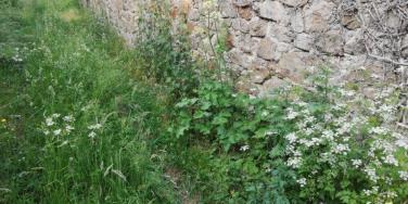 Regain-Mure-en-juin-plantes