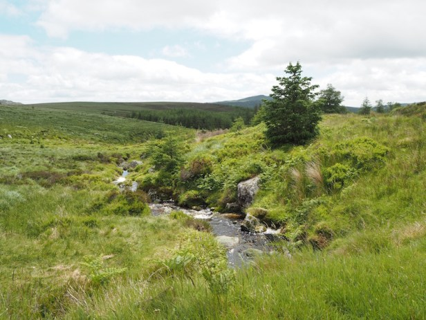 Arroyo en Wicklow Mountains