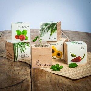 casa-ufficio Ecocube - piante in cubi di legno - Aloe Vera
