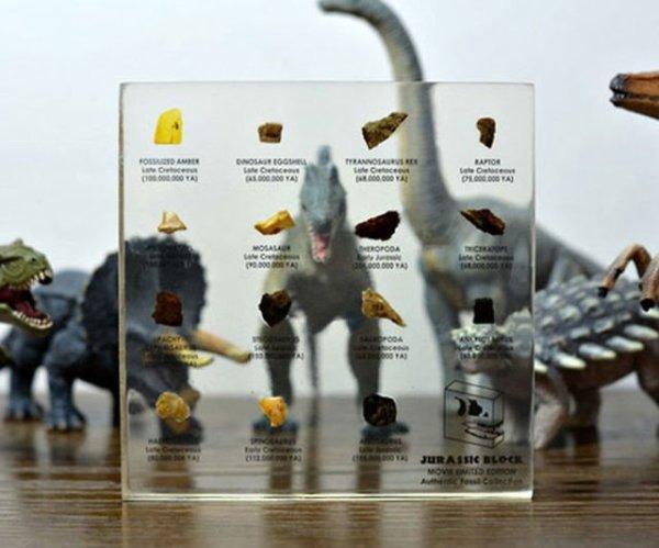 Regali per Ragazzi  JurassicBlockDinosaurFossilCollection-Regalo Collezione di fossili di dinosauro del Giurassico