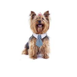 Cravatte per cuccioli!