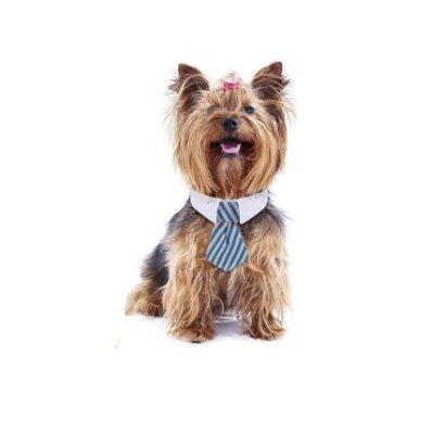 Amici Animali  4PezziRegolabilePetCravatteGattoCaneCostumeCravatta-Regalo Cravatte per cuccioli!