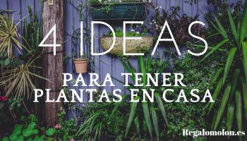 Ideas para decorar tu casa con plantas