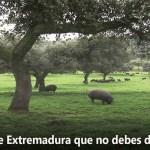 5 productos de Extremadura que no debes dejar de probar