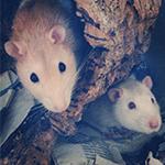 Jack & Johnny