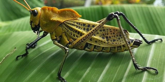insecto - Insectos, 41% en declive y 30% en peligro de extinción
