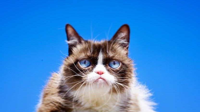 grumpy cat muerte - Muere Grumpy Cat, la famosa gata malencarada de Internet