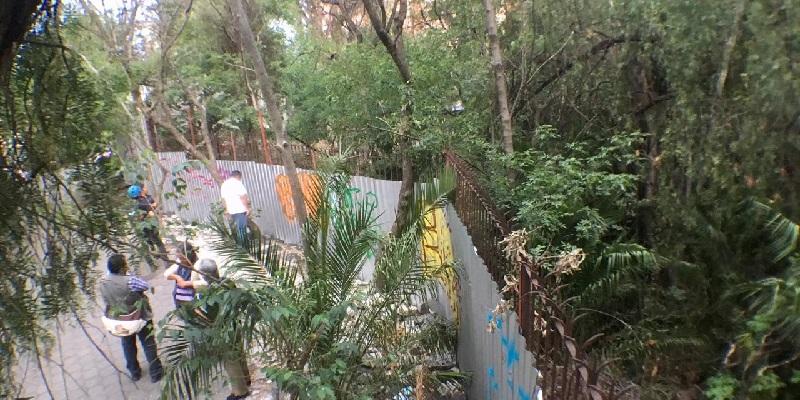 santa ursula - inmobiliaria amenaza talar 500 árboles en Santa Úrsula