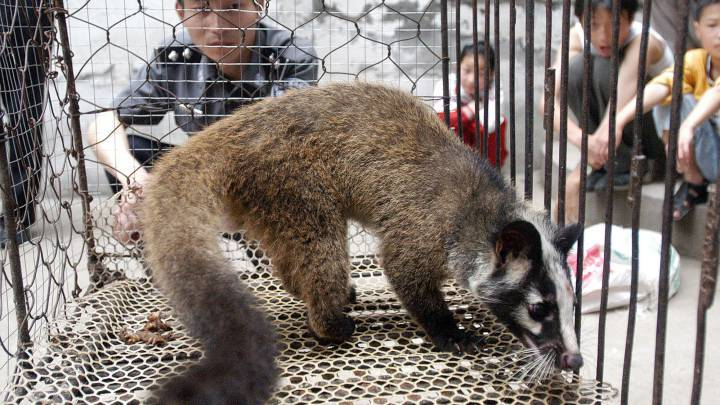 1580229491 884574 1580229629 noticia normal recorte1 - Alemania propone terminar con el comercio de animales salvajes y evitar una nueva pandemia