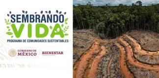 Sembrando vida, recuperar bosques