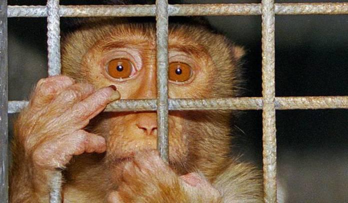 Trágica vida y muerte de las mascotas condenadas por la indiferencia