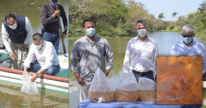 Habría desatado un ecocidio en humedal Chucho Nader soltando tilapias