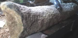 Hallan en Argentina cola fosilizada de armadillo gigante que vivió hace 700 mil años