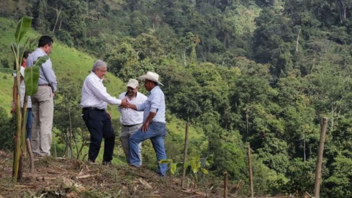 AMLO invierte 4 veces más que EU en reforestación