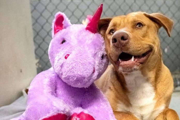 Perro callejero roba peluche de unicornio hasta que consigue que se lo compren