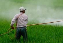 Denuncian presión de productores agrícolas de EU a México