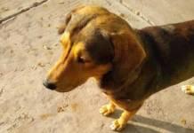 Vinculan a proceso a presunto asesino del perro Rodolfo Corazón