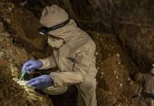 Reconstruyen genoma de oso de la Edad de Piedra con ADN localizó en cueva de México