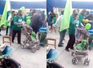 Pintan de verde a perrito durante mítin del PVEM; usuarios denuncian maltrato