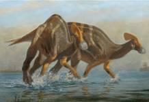 Paleontólogos identifican nueva especie de dinosaurio en México: Tlatolophus galorum
