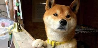 ¡Triste noticia! Falleció el famoso perrito que vendía camotes