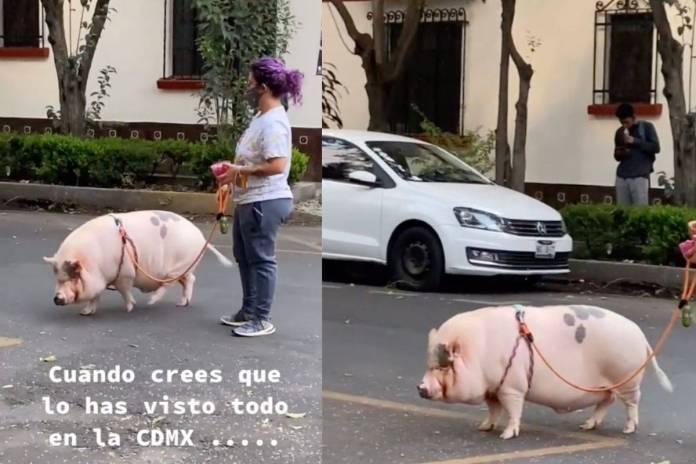 Mujer sorprende paseando a un cerdito en calles de la CDMX