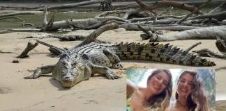 Cocodrilos atacan a turistas inglesas en Oaxaca; una se encuentra grave de salud
