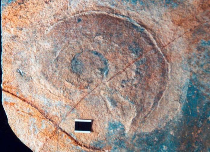 Descubren en Hidalgo fósiles marinos de hace 100 millones de años