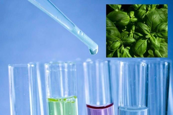 México fue elegido para probar nueva vacuna contra Covid-19 de origen vegetal