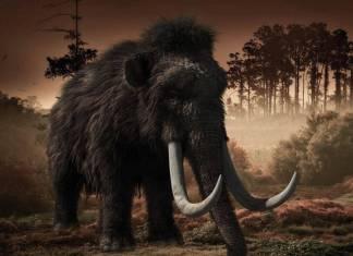 Científicos buscarán revivir al mamut lanudo