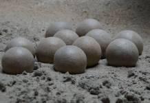 Hallan más de 100 huevos fosilizados de dinosaurios