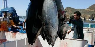 Gobierno de Bonilla carece de facultades para conceder permisos de pesca: Sader
