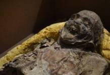 INAH advierte que más de cien momias de Guanajuato están en riesgo